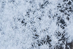 Spiky winter snow ice crystals Royalty Free Stock Photography