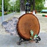 Spil 350年橡木 免版税库存照片