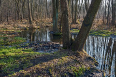Spillage small deciduous forest river Stock Images