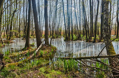 Spillage small deciduous forest river in the spring Royalty Free Stock Photos