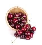 Spillda mogna Cherry Fotografering för Bildbyråer