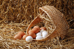 Spilled basket of eggs Royalty Free Stock Photo
