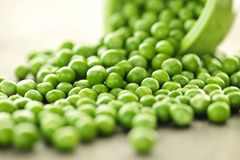 Spilled bowl of green peas Royalty Free Stock Image