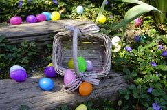 The Spilled Easter Eggs. Colorful plastic eggs scattered on wooden stairs and blooming  greenery. Rattan egg basket on its side. Horizontal. Close-up Royalty Free Stock Photo