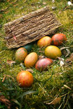 Spilled easter eggs in grass. Spilled easter eggs from the basket Royalty Free Stock Photo