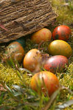 Spilled easter eggs in grass. Spilled easter eggs from the basket Stock Photography