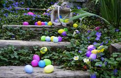 The Spilled Egg Basket. Brightly colored eggs scattered all over the wooden stairs in the garden surrounded by ground cover with purple and white flowers Stock Photos