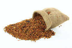 Free Spilled From Burlap Sack Pickling Spice. Stock Photos - 14497053