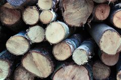 spilled pine logs are stacked on top of each other, in stacks, destruction of the forest, felling of trees, background of wood royalty free stock photo