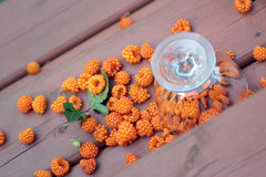 Spilled ripe salmonberries Royalty Free Stock Photos