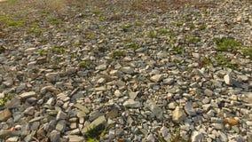 Spillror på jordningen, texturbakgrund av spillror stock video