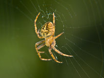 Spin stock afbeeldingen