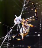 Spin die een insect aanvallen stock afbeeldingen