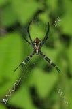Spin die op een Web wacht Royalty-vrije Stock Fotografie