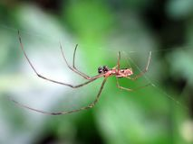 Spin die op zijn prooi op zijn nest wachten stock afbeeldingen