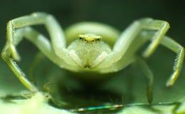 Spin die op zijn prooi wachten Royalty-vrije Stock Foto