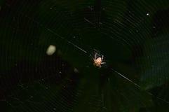 Spin die zijn Web spinnen Stock Foto's