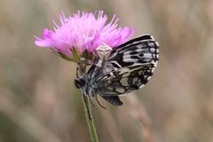 Spin dodende vlinder Royalty-vrije Stock Foto's