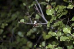 Spin in een binnenplaats Stock Afbeeldingen