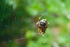 Spin in een Web Stock Fotografie
