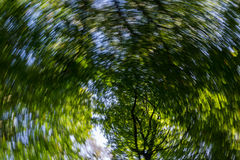 Spin effect looking of past pine trees Stock Photo