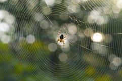 Spin en spinneweb Royalty-vrije Stock Fotografie