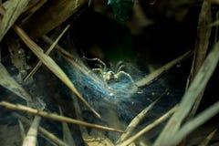 Spin en Zijn Spinneweb in Forrest, de Waterval van Huay Maek Kamin Royalty-vrije Stock Foto's