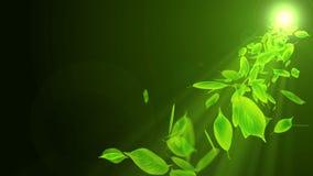 Spin of falling leaf. Green summer leaf background. Leaf confetti. CG loop animation. Beautiful pretty leaves. Natural animation. Leaf pattern on black vector illustration