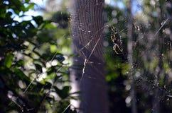Spin het hangen op het spinneweb Stock Afbeeldingen