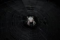 Spin in het midden van een Web Stock Fotografie
