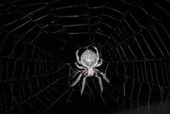 Spin in het midden van een Web Royalty-vrije Stock Afbeelding