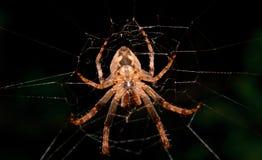 Spin in het net bij nacht Stock Afbeelding