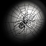 Spin in het Web Royalty-vrije Stock Afbeelding