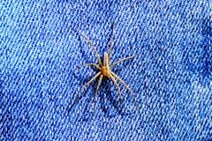 Spin lange lidmaten stock afbeeldingen