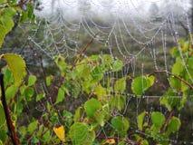 Spin netto met ochtenddauw, Litouwen royalty-vrije stock afbeeldingen