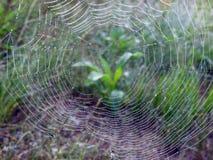 Spin netto met ochtenddauw, Litouwen stock afbeelding