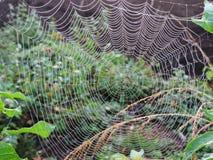 Spin netto in moeras, Litouwen royalty-vrije stock foto