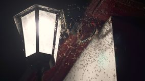 Spin op de netto jachtenvliegen stock footage