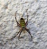 Spin op een muur stock afbeelding