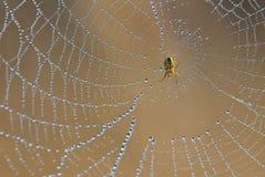 Spin op een spiderweb Stock Afbeelding