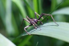 Spin op een stam van gras in de tuin Stock Fotografie