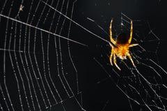 Spin op een Web Royalty-vrije Stock Afbeelding
