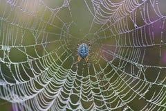 Spin op een Web Stock Afbeeldingen