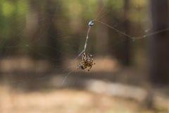 Spin op een Web Stock Foto's