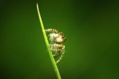 Spin op groen blad Stock Afbeeldingen