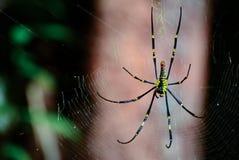 Spin op het spinneweb wordt neergestreken dat Stock Foto