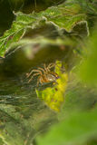Spin op spinneweb stock afbeeldingen