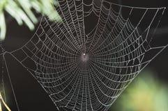 Spin op Web royalty-vrije stock afbeeldingen