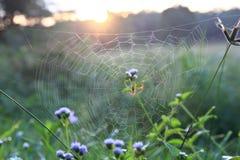 Spin op Web in ochtend Stock Foto's