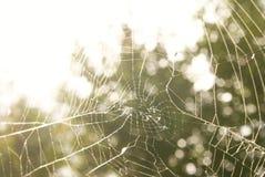 Spin` s Web op het groene gebied Stock Foto